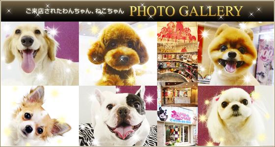 ご来店されたわんちゃん、ねこちゃんのPhoto_Gallery